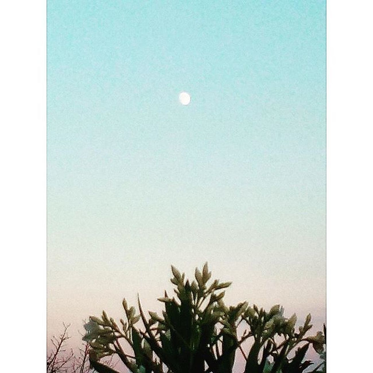 una luna piccolissima Luna Moon Sunset Sky Skylovers Bluesky Nature Naturelovers Igersitalia Igersmarche Lategram Landscape Paesaggio