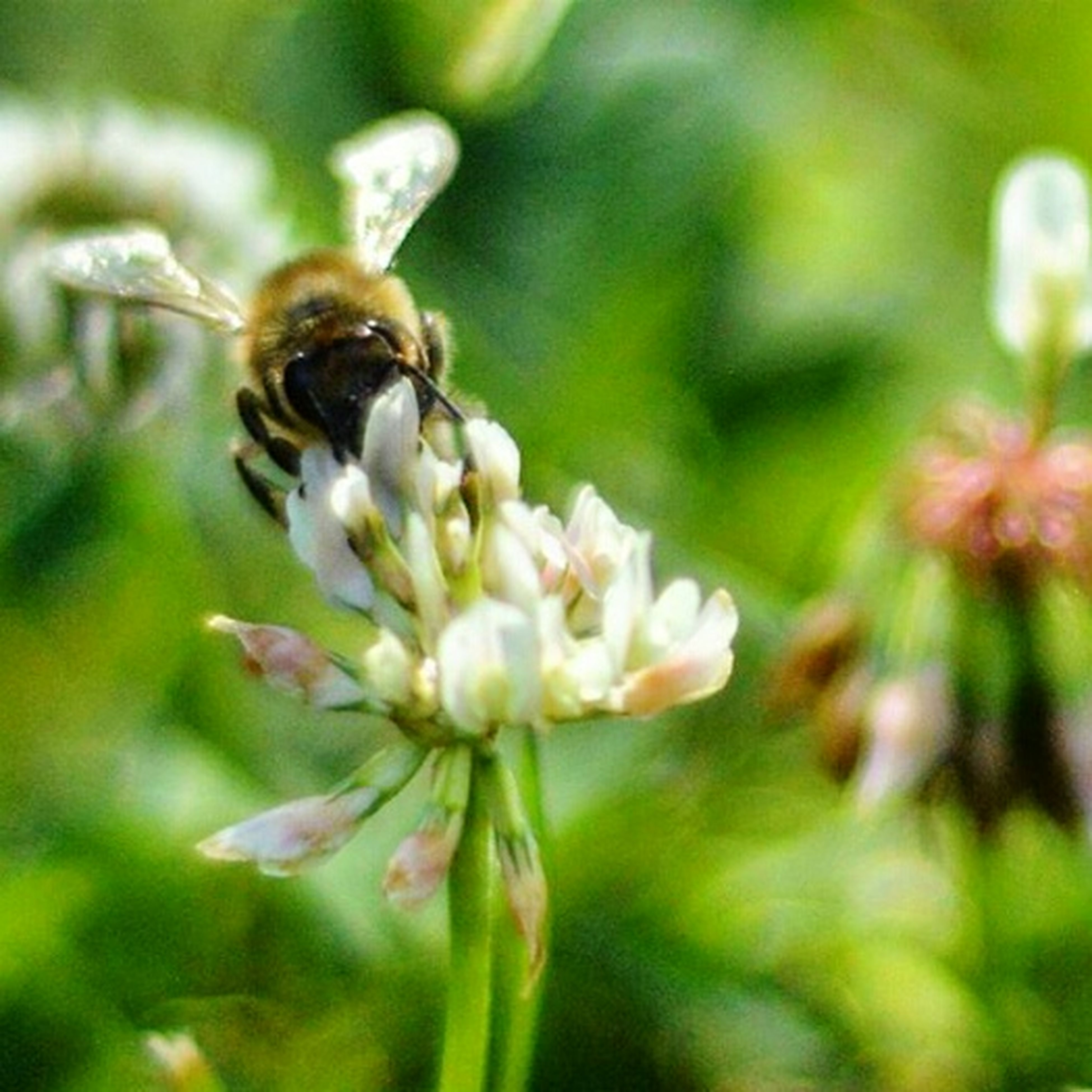 flower, insect, nature, fragility, one animal, animal themes, growth, animals in the wild, plant, bee, petal, close-up, beauty in nature, freshness, day, no people, outdoors, focus on foreground, pollination, flower head