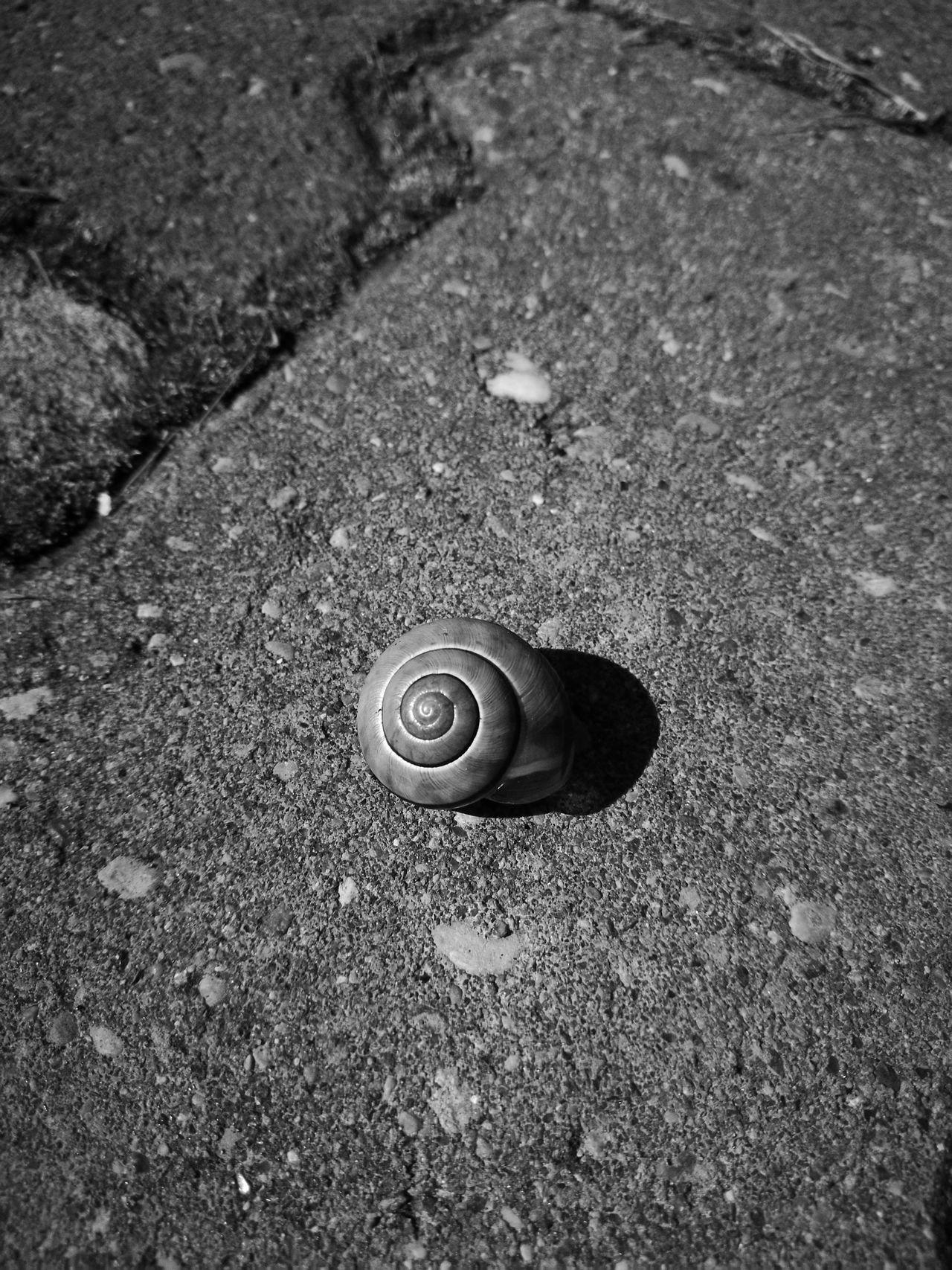 Snail Minimalism HuaweiP9 Blackandwhite Wildlife & Nature Nice Photo Taking Photos Betterandbetter
