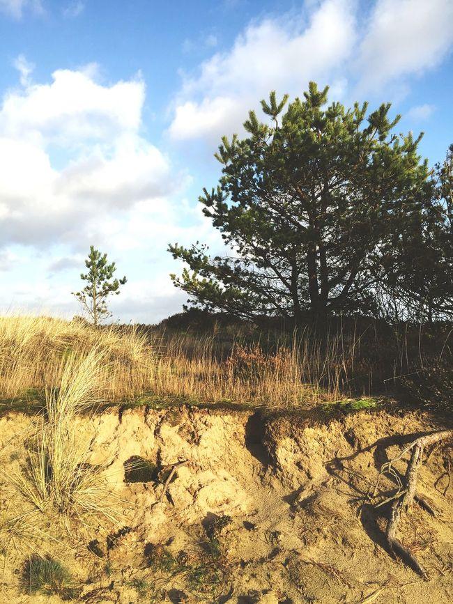 Out For A Walk Billund Denmark Forest Desert Nature Green Walk Sunshine Sand Roots