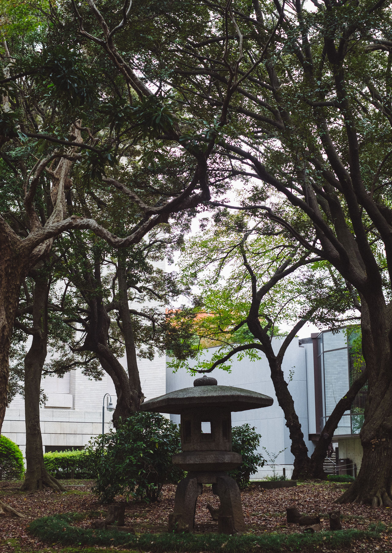 Architecture Beauty In Nature Branch Built Structure Day Growth Nature No People Outdoors Sky Tokyo Tokyo National Museum Tokyo Street Photography Tokyo,Japan Tree Tree Trunk