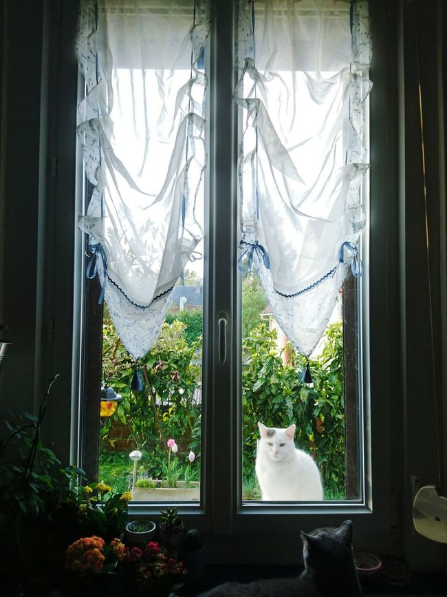 Cats & Windows Cats Animal_collection Cat Catoftheday Animal Photography Window View Window Morning Eyeem France Eye4photography