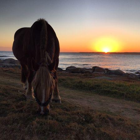 Uruguay Natural Cabo Polonio Uruguay Rocha Sunset Uruguaynatural First Eyeem Photo