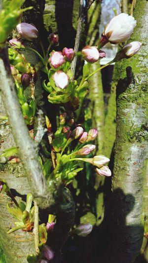Leone Filter  Tree Flowers Spring