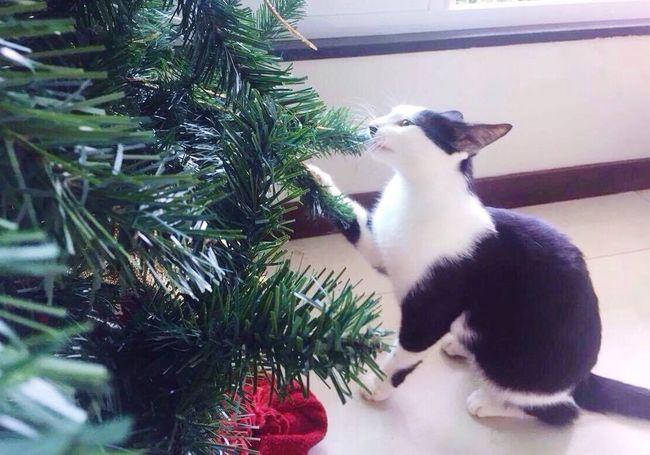 December Pets Feline Cute Cat