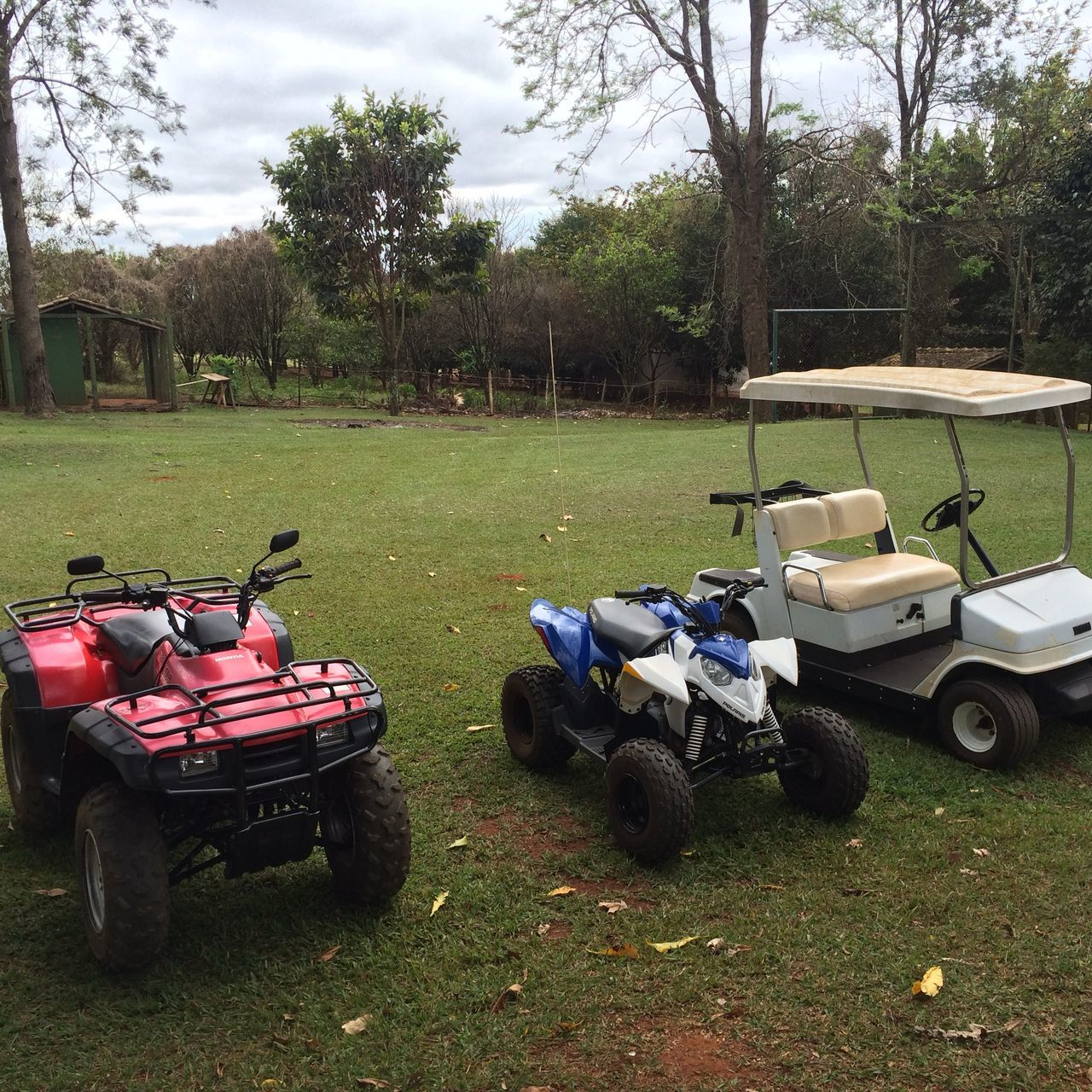 tree, grass, land vehicle, field, transportation, day, mode of transport, outdoors, growth, no people, golf, sky, stationary, nature, golf course