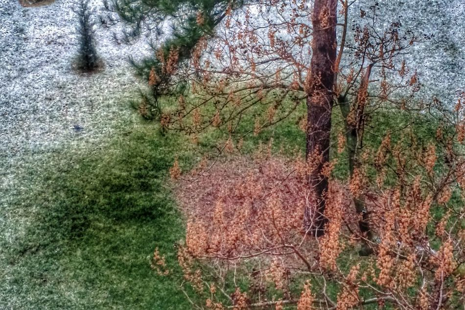 2 /02/ 15. Just a little snow From My Window