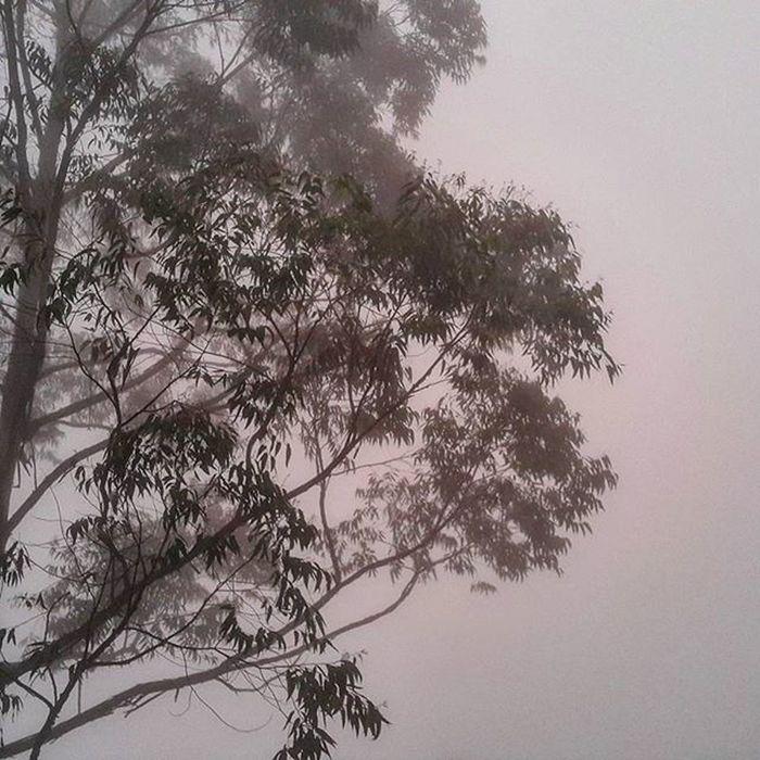"""На наш отель напали облака, и все стало сказочным... Как в фильме моем любимом """"Сонная лощина"""". шриланка шриланка2016 SriLanka Srilanka2016 турсемействахеваге"""