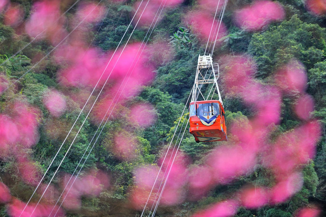 Agriculture Cable Car Cherry Blossoms Comfortable Day Flower Go Sightseeing Growth Hanging High Altitude Holiday Landscape Nature No People Outdoors Pink Taiwan Tourism Transport Travel Tree Vacation Millennial Pink