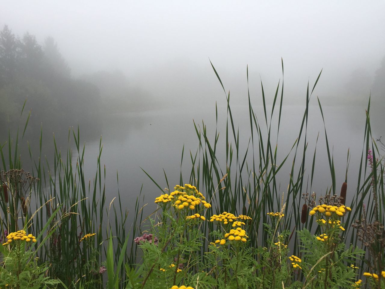 Foggy pond Water Iphoneonly Nature On Your Doorstep Nofilter Nature Countryside EyeEm Nature Lover Landscape Fog
