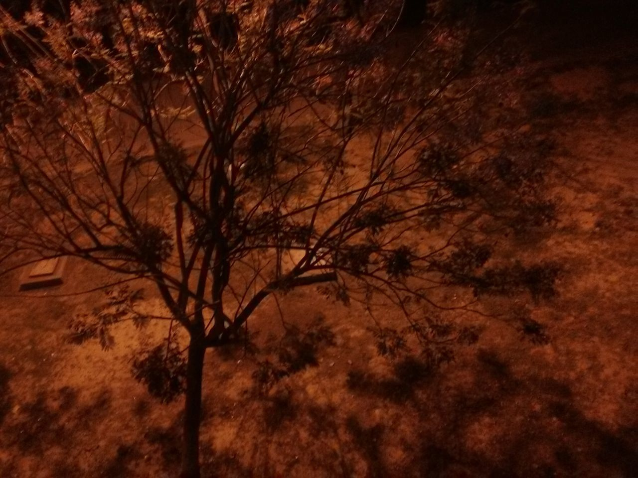 Tree Thaparuniversity_patiala Thapar Night Night View Street Light From My Balcony Tree Under The Night Lights Showcase April Showing Imperfection