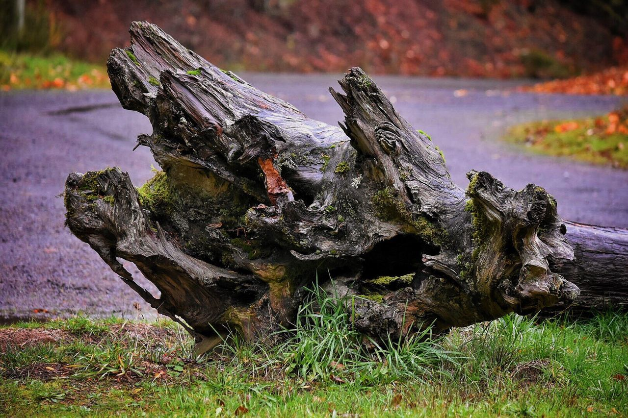 Tree Stump No People Wood - Material Nature Growth Outdoors Close-up Beauty In Nature Day Lakeshore Tranquility Beautiful Nature Lake Campground Tree Roots Roots Of Tree Tree Roots  Winter Deterioration Tree_collection  Root Uprooted Fallen Fallen Tree
