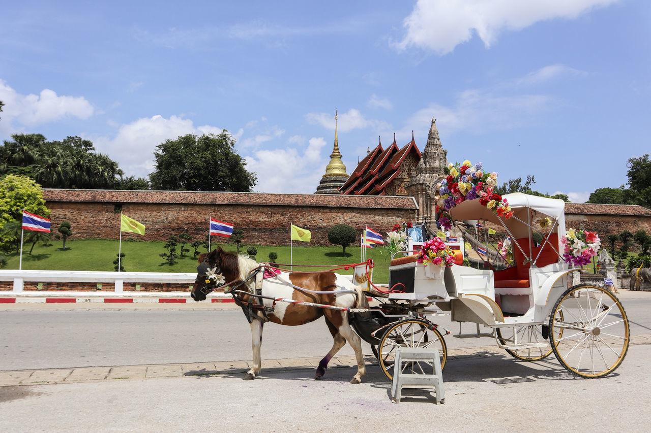Wat Prathat Lampang Luang in Lampang Province, Thailand Built Structure Carriage Cloud - Sky Day Domestic Animals Horse Horse Cart Horsedrawn Lampang Livestock Mammal Men Mode Of Transport Outdoors Sky Thailand Transportation Tree Working Animal Live For The Story