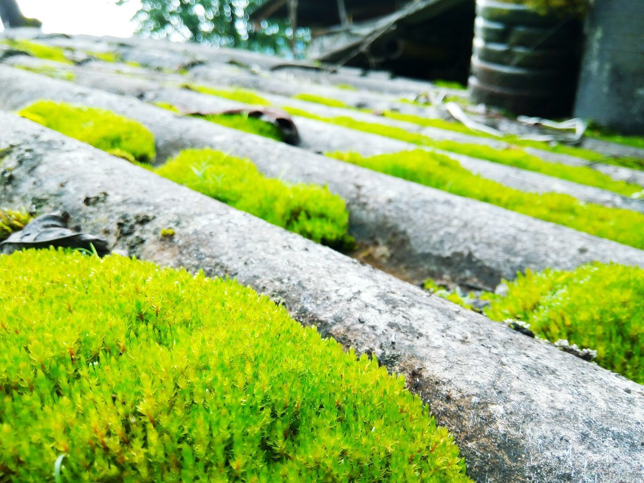 green color, day, no people, outdoors, nature, growth, moss, grass, water, close-up, beauty in nature