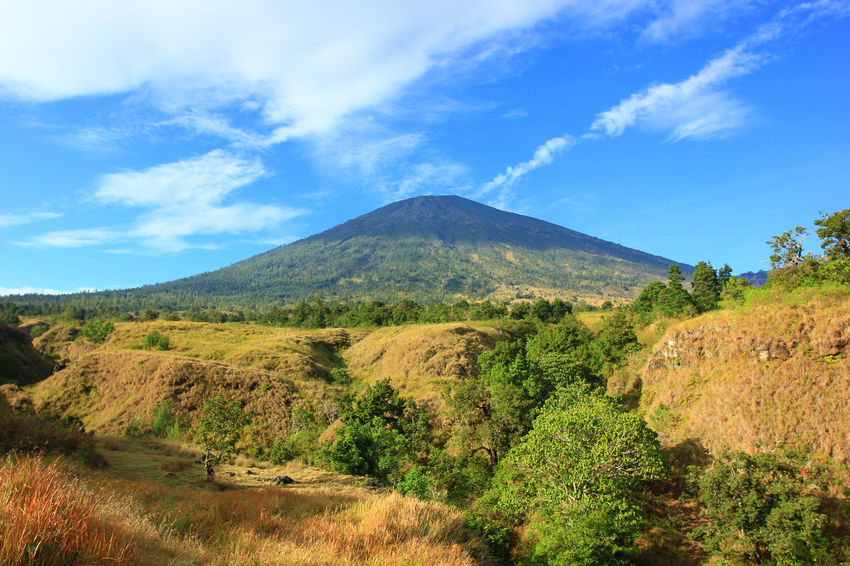 Cloud - Sky Landscape Nature Tree Sky Scenics Beauty In Nature Outdoors Day Mountain Volcanic Landscape No People Blue Rinjani Rinjanimountain Rinjani National Park Rinjanimount Traveller Backpack Adventure Nature Forest Tree INDONESIA Mountaineering