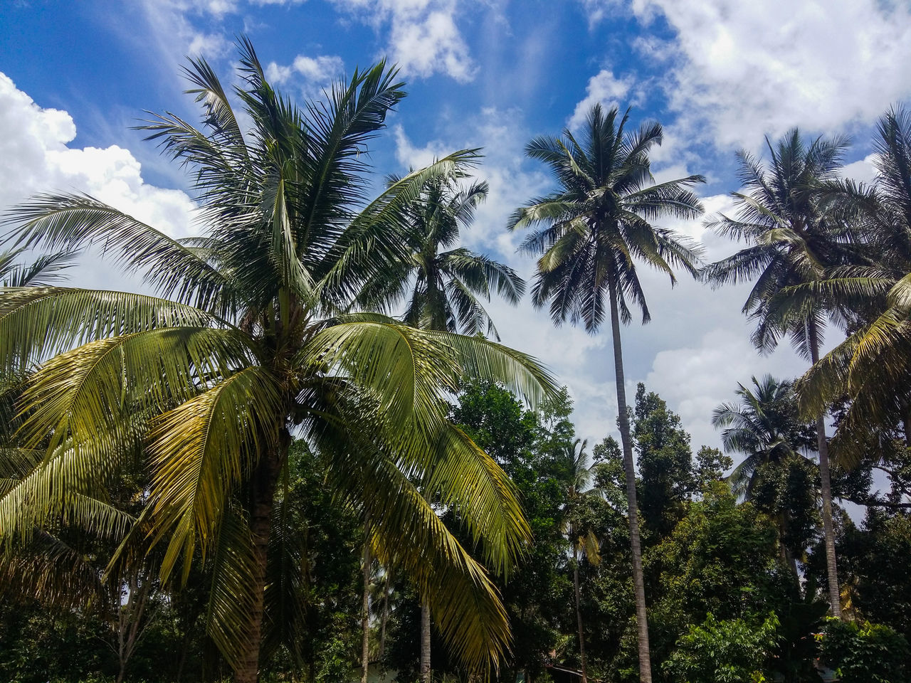 Nature Low Angle View Sky Tree Growth No People Green Color Beauty In Nature Cloud - Sky Outdoors Palm Tree Day Close-up Nature EyeEmNewHere Blue Landscape Beauty In Nature Tranquility Backgrounds Sea Beach
