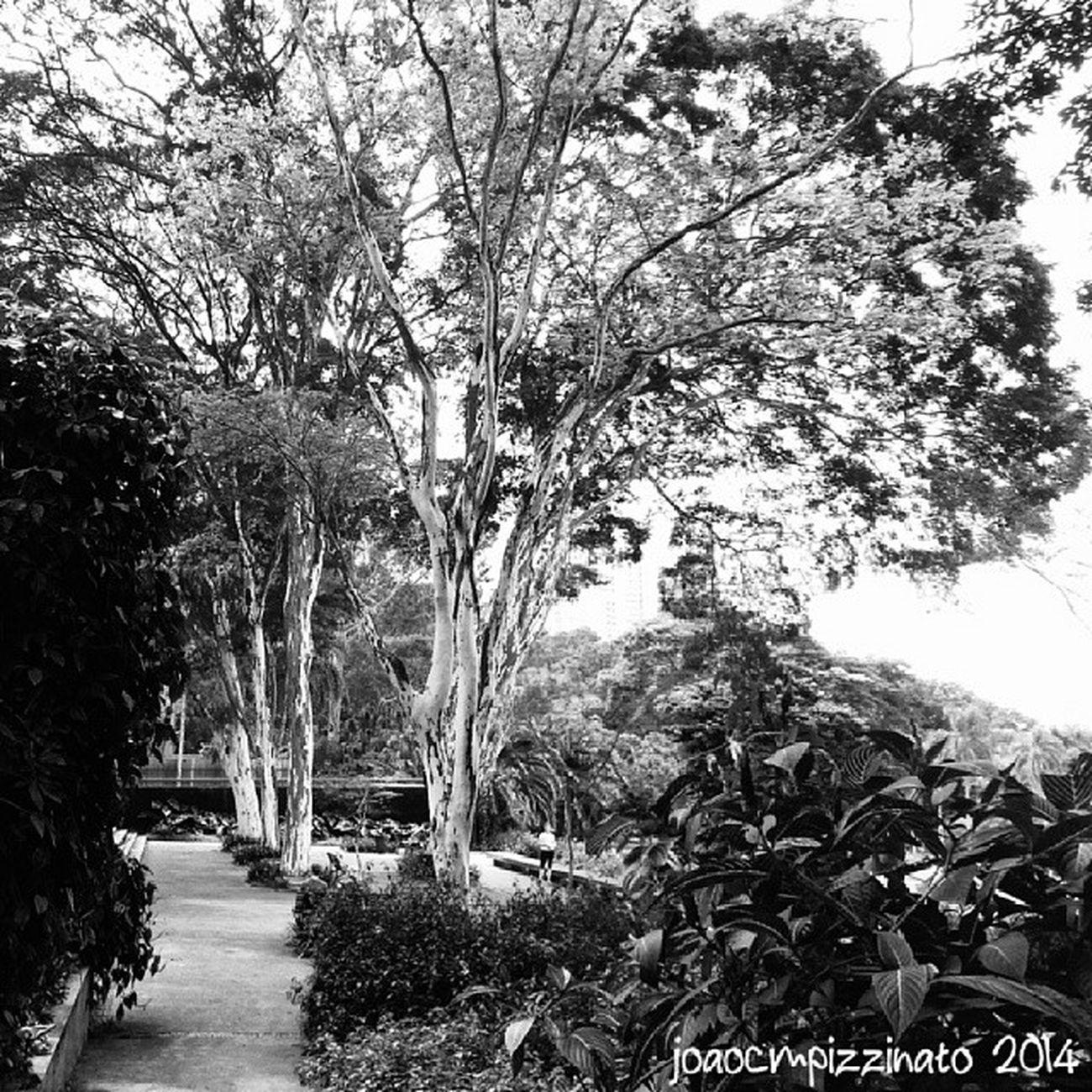 Nature in black and white. Tree Plants Nature Blackandwhite city zonasul saopaulo brasil photography burlemarx amorpaulistanobw