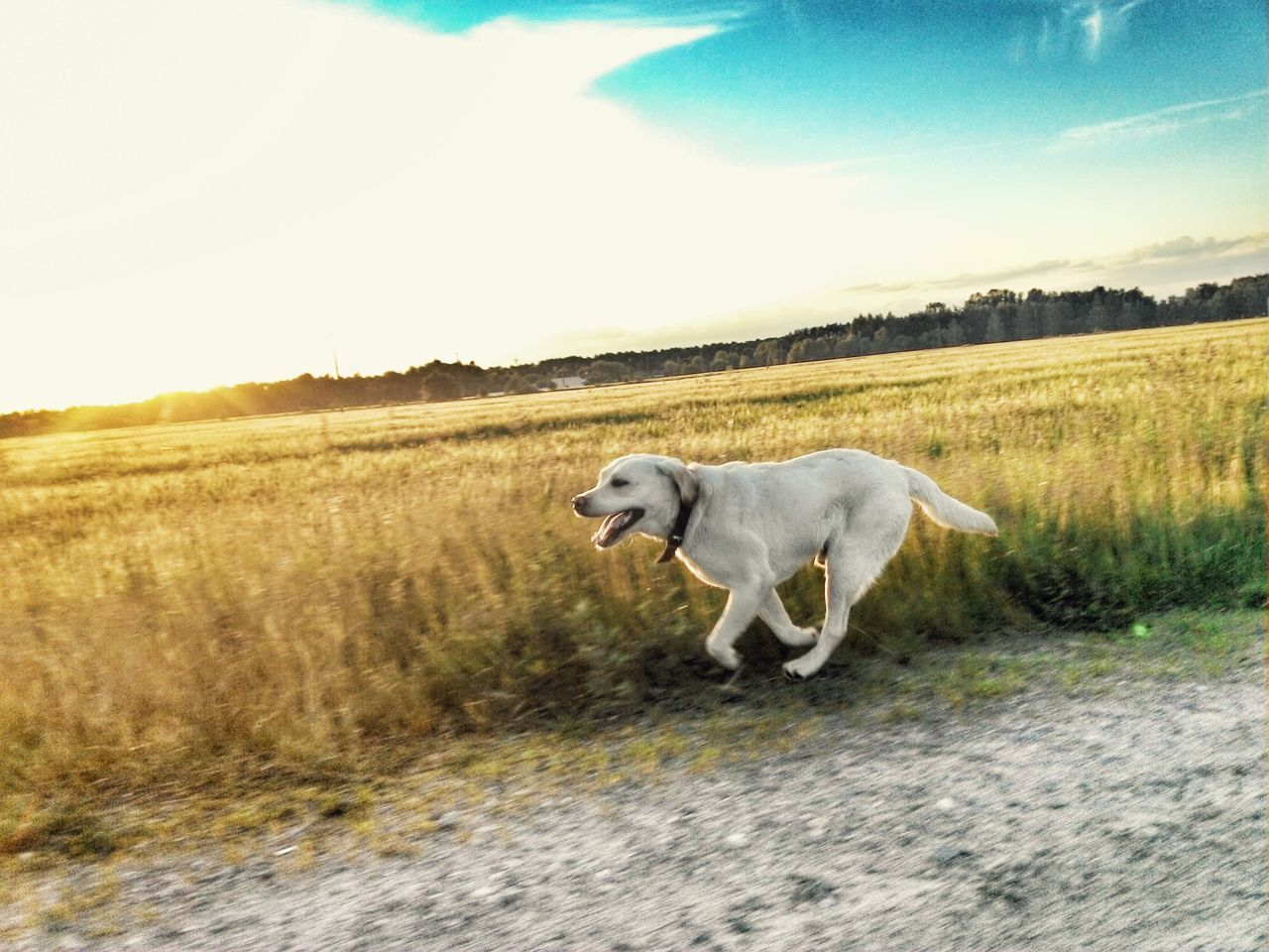 Beautiful stock photos of pets, Animal Themes, Belarus, Cloud, Day