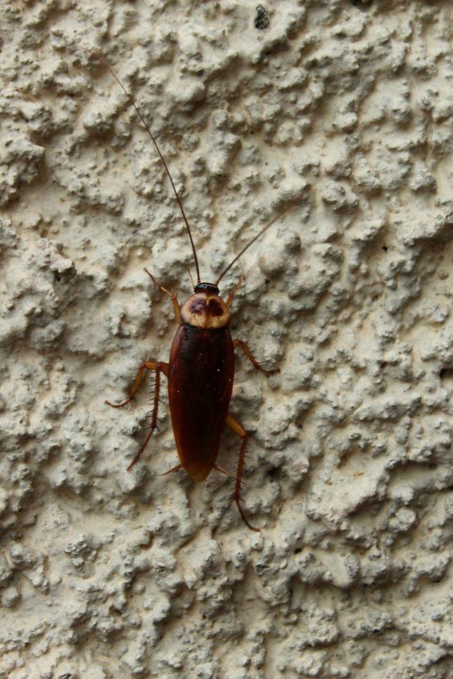 Natureza Nature Insect Paparazzi Inseto Insect Cucaracha Cockroach Barata