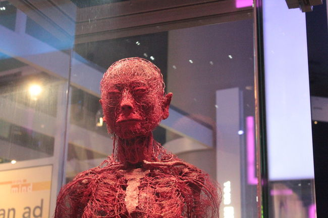 Art Blood Vessels Body Works Body Works Exhibit Close-up Human Body Human Tissue Intriguing Museum Museum Of Science And Industry No People