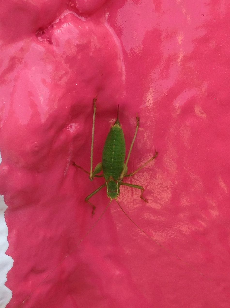 Bug Greenbug Check This Out
