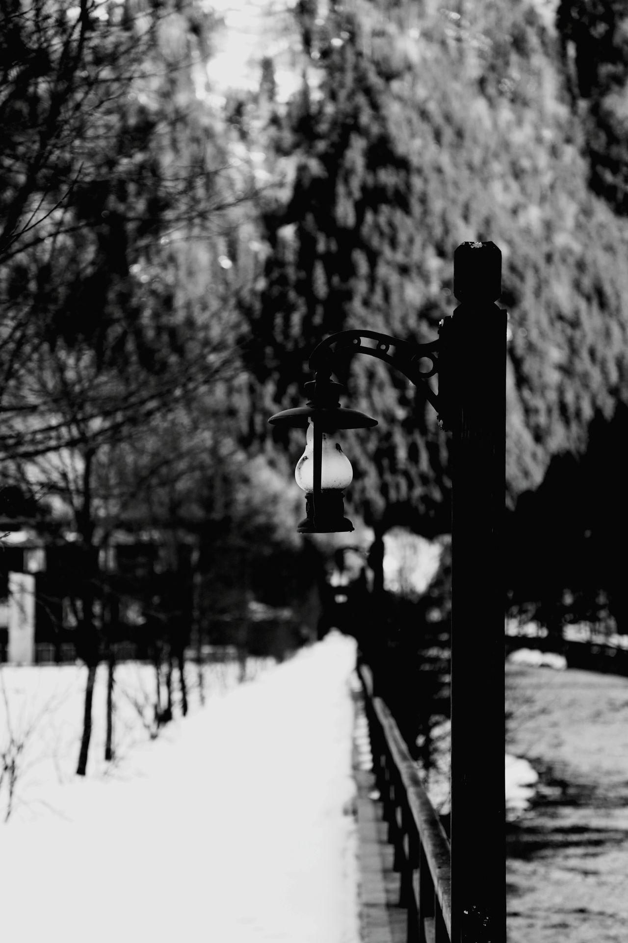 Trabzon Uzungöl Lamp Lamba Siyahbeyaz Blackandwhite Gece Night Photography EyeEm Gallery