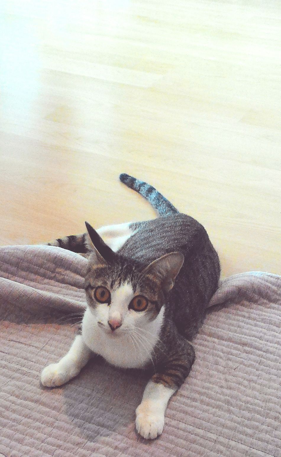 Cat Lovers Catoftheday Cat Catsagram