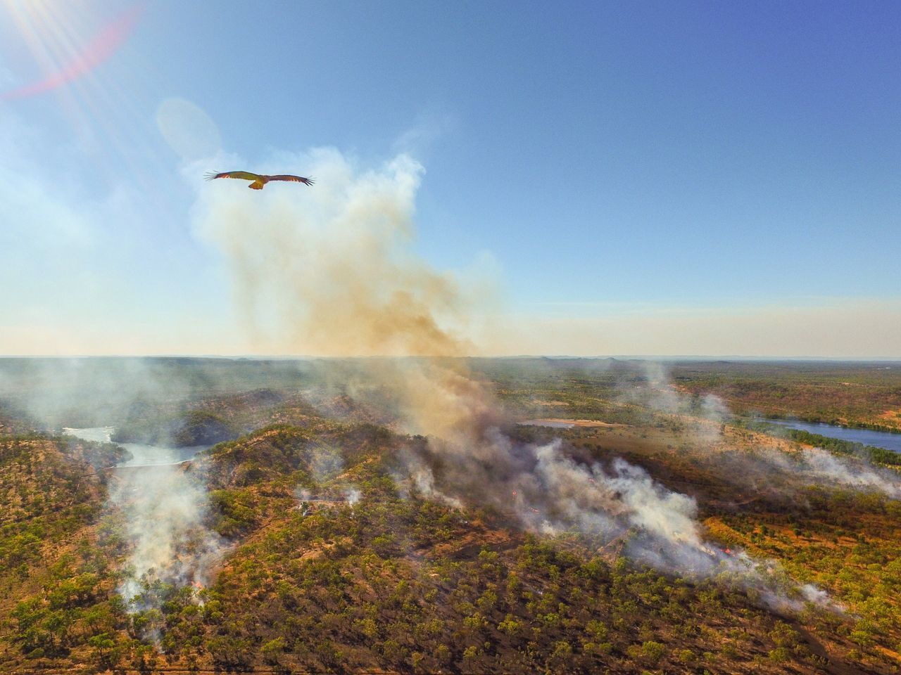 Like an eagle in the sky. Outdoors Flying Drone  Dronephotography Droneshot Drones Dronepointofview Birds Eye View Bushfire Eagle Eagle Portrait Eaglephotography Eagles Nature EyeEm Best Shots EyeEm Nature Lover EyeEmBestPics Beautiful Beautiful Nature Darwin Northern Territory Australia Australian Landscape Australian Outback Australian Birds First Eyeem Photo