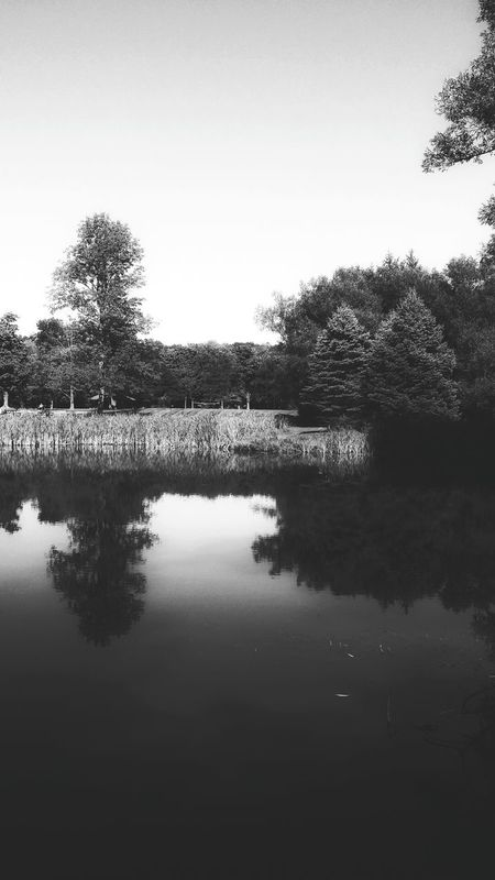 Black And White Photography Blk N Wht Reflections In The Water Taking Photos State Park  Tree Porn Natures Beauty Serene Scene Serenity Nature_collection Balanced Elements