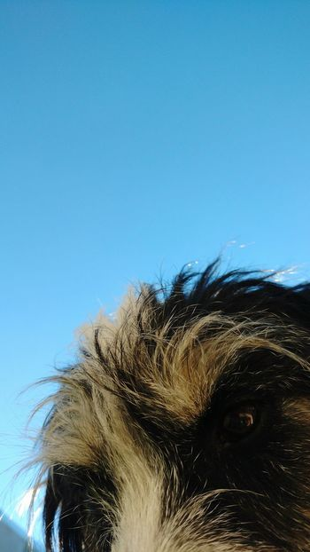 One Animal Dog Close-up Clear Sky Nature Outdoors Can Dog
