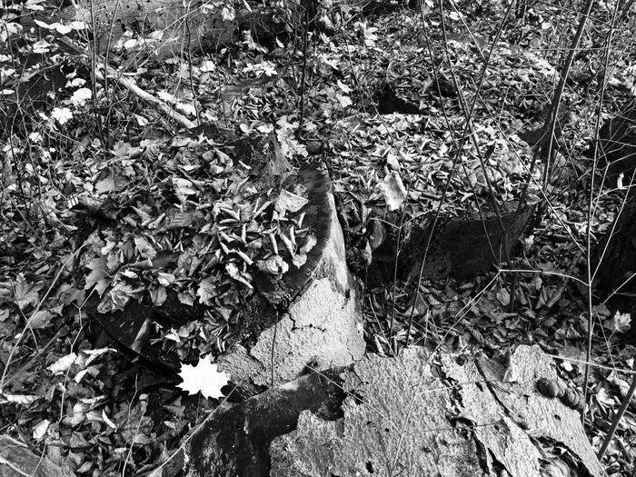 Blackandwhite Monochrome Light And Shadow Landscape