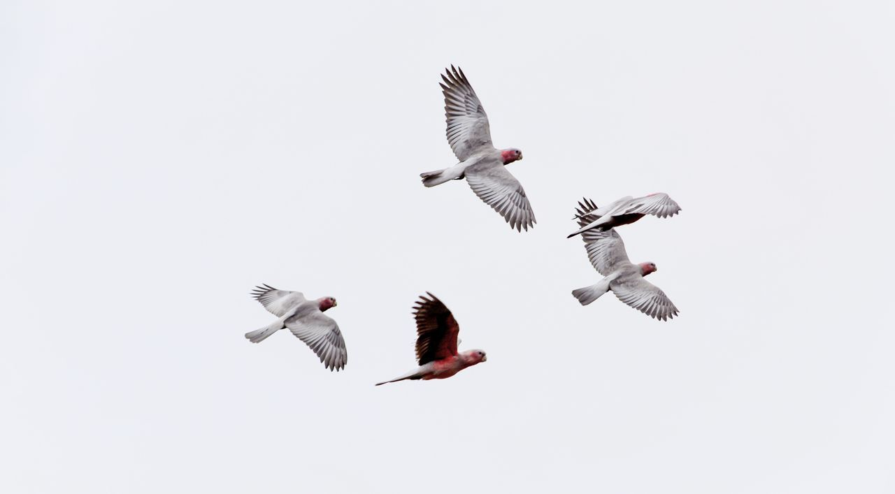 Beautiful stock photos of birds, Animal Themes, Animals In The Wild, Bird, Day