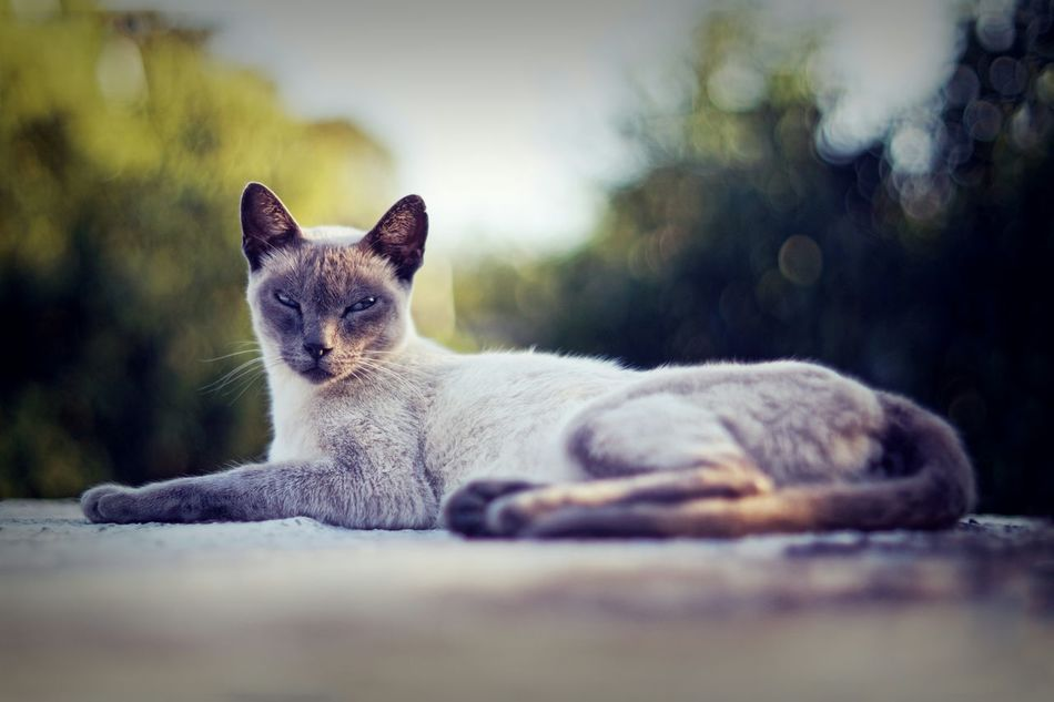 Beautiful stock photos of kitty, Argentina, Auto Post Production Filter, Cat, Clear Sky