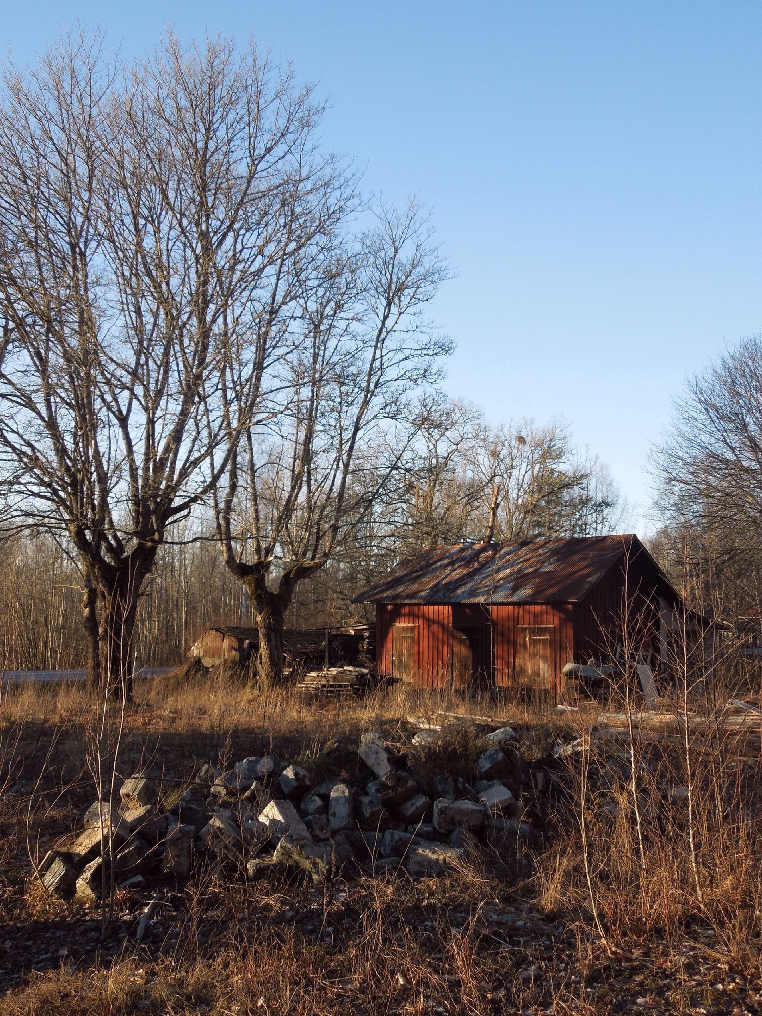 built structure, architecture, tree, building exterior, house, clear sky, bare tree, abandoned, residential structure, field, old, blue, obsolete, day, sky, branch, damaged, residential building, nature, outdoors