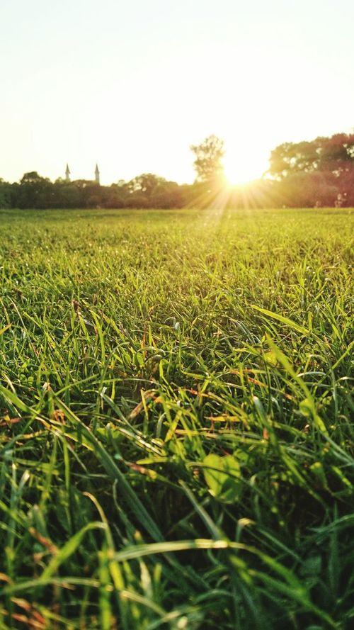 Enjoying The Sun Picnic Summer Summertime Sunset Silhouette City Life Sunshine Sony Xperia Z3+ Enjoying Life
