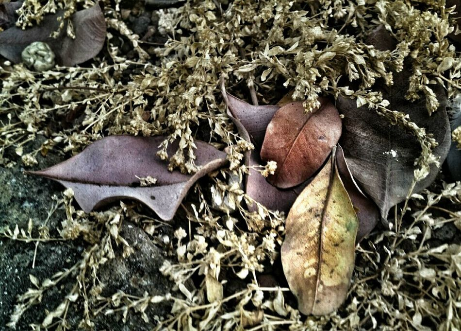 Afternoon... The Beauty Of Decay Autumn Leaves Colors Of Life Details And Colors Today's Hot Look Dryleaves Changingcolors Outdoors Natural Beauty Nature Textures AMPt - Still Life (Nature Morte)