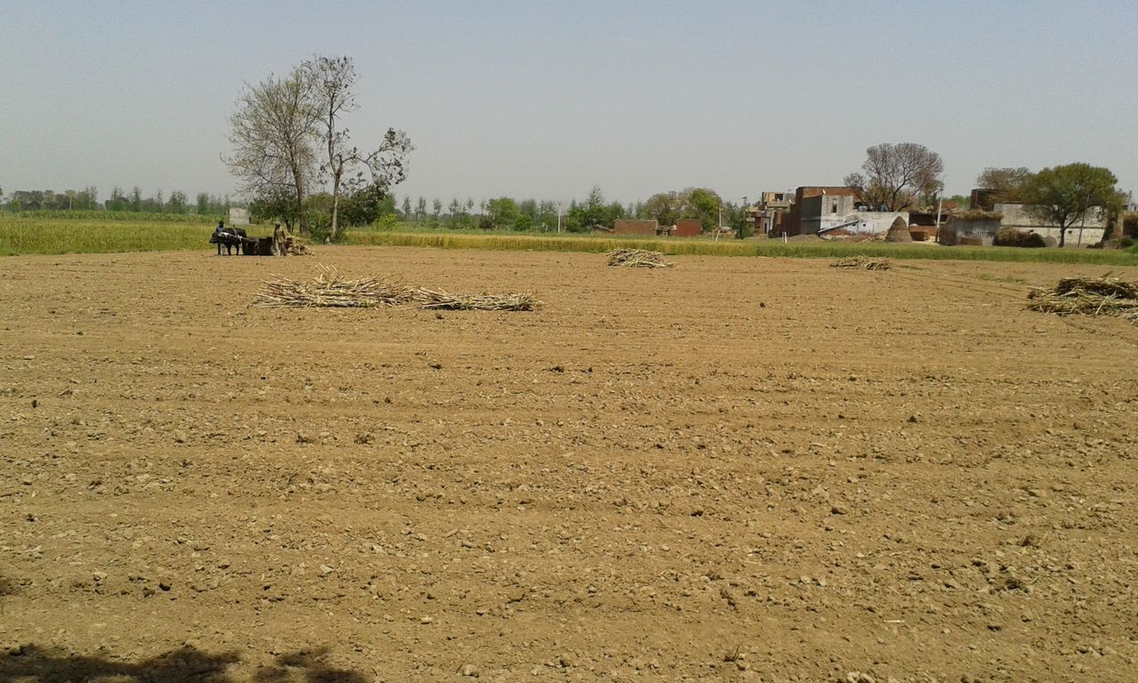 tree, field, domestic animals, agriculture, landscape, day, clear sky, outdoors, mammal, nature, rural scene, men, real people, large group of animals, plough, livestock, sky, architecture, beauty in nature, one person, plowed field, people