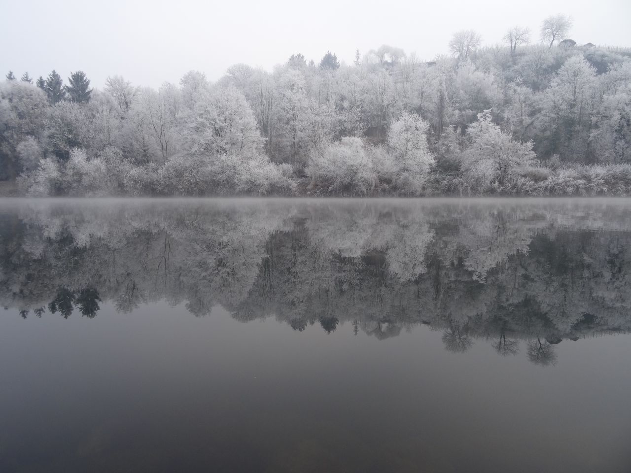 Tree Reflection Water Nature Tranquility Beauty In Nature Lake Standing Water Tranquil Scene Scenics Growth Waterfront Outdoors No People Idyllic Germany Fog Sky Symmetry Winter Wonderland Neckar River White Frost Mirror Beauty In Nature Frost