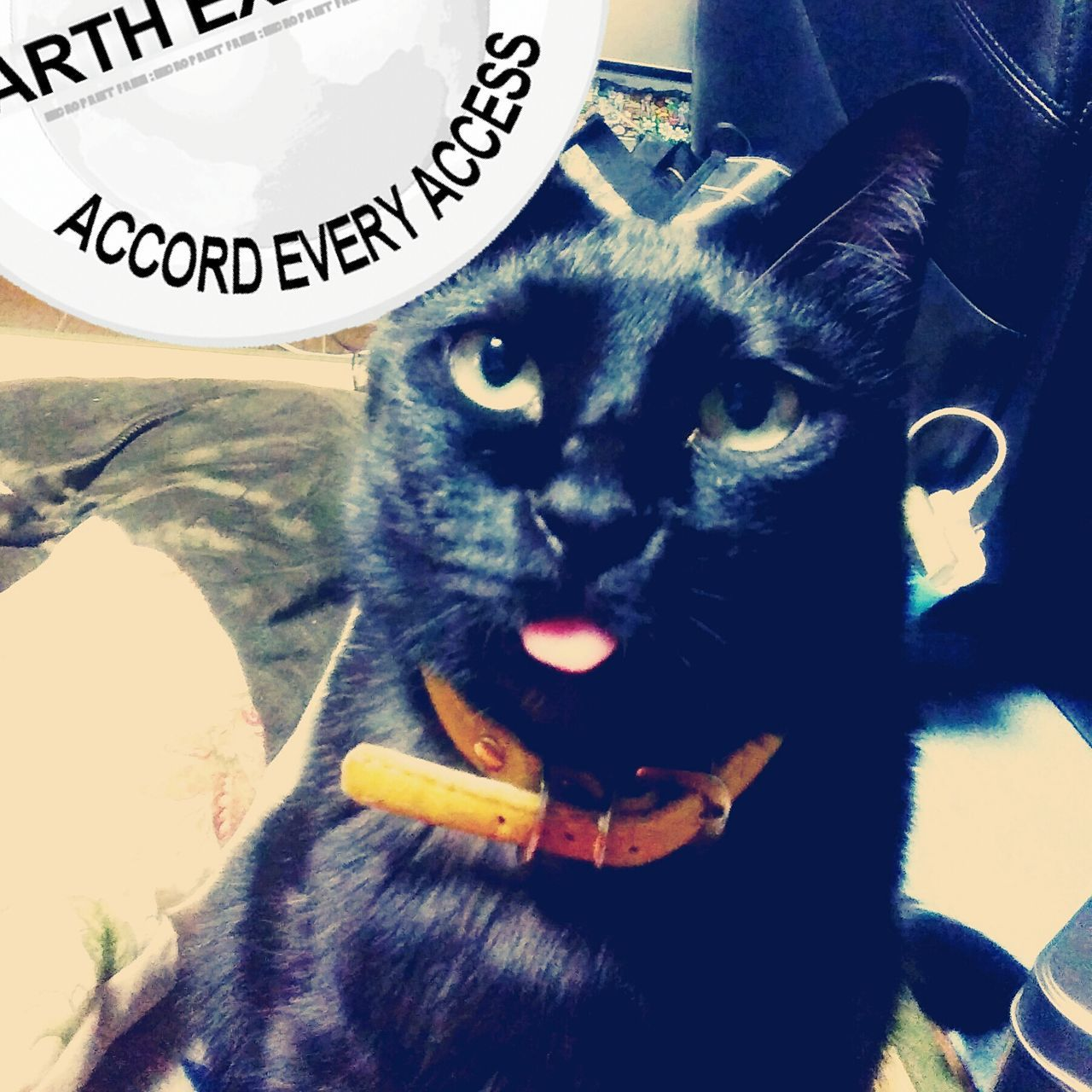 Pets Domestic Animals One Animal Animal Themes Mammal Text Dog Looking At Camera Close-up No People Indoors  Portrait Feline Day Siamese Cat Tongue Tongueout Cat BLackCat