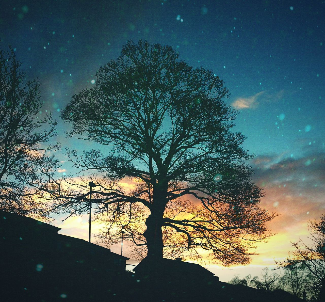 ... as the Earth dances in Space ... Sky Sunset Night Tree Dusk Dramatic Sky Silhouette Scenics Oak Tree Newtown Powys Sunset Leafless Branches Edit Maximalism No Minimalism Grain дерево Закат дуб