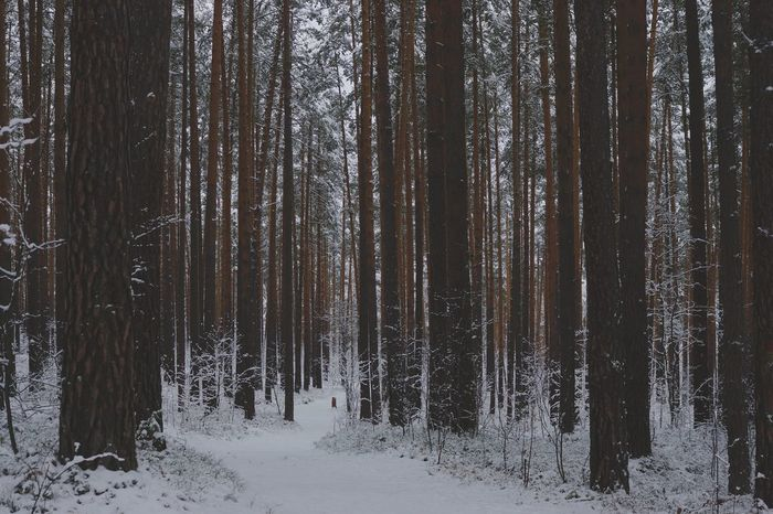 Forest Tree Beauty In Nature Ural Russia Snow Beauty In Nature Nature Ural Day Winter Snow No People Cold Temperature сказка