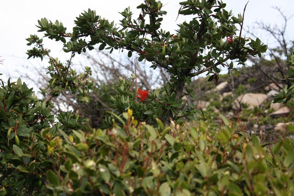 Beautiful stock photos of single, Botanic, Bush, Challenge, Flower