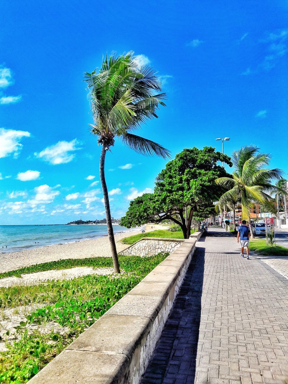palm tree, tree, day, growth, outdoors, nature, sky, water, sea, beauty in nature, blue, scenics, horizon over water, no people