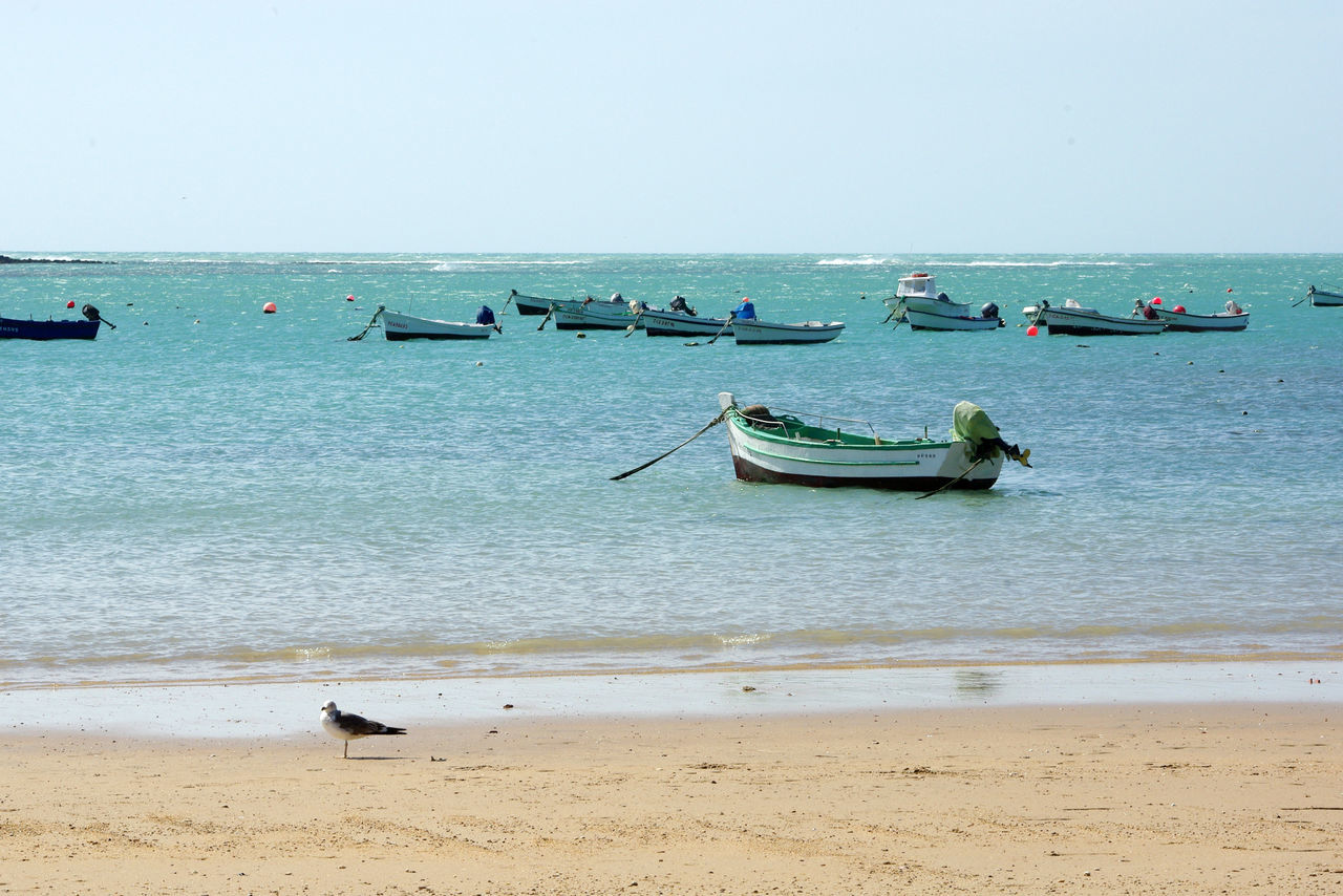 Beach Boats Day Horizon Over Water Sand Sea Seagull Seaside Turqoise Water