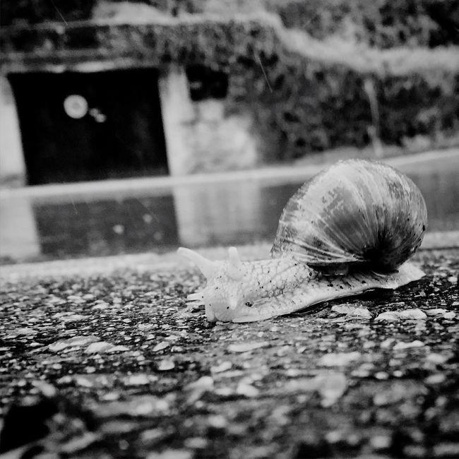 Snail Dark Luxembourg DarkLuxembourg