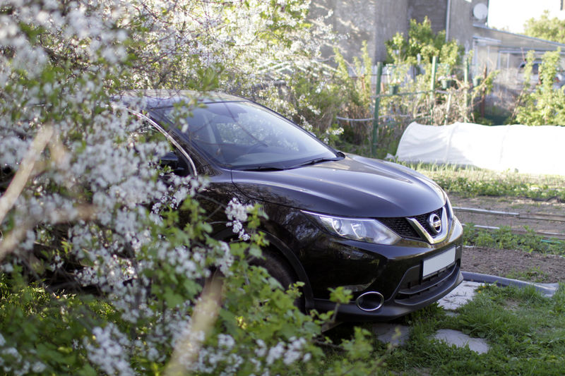 Car Transportation Tree Mode Of Transport Land Vehicle No People Outdoors Day Grass Shiny Nature Close-up Nissan Nissan Qashqai