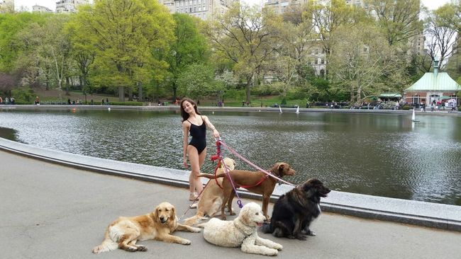 Hanging Out Taking Photos Dog Love Dogs Of EyeEm Walking Around New York Enjoying Life New York City Hello World Cheese! Check This Out New York Life EyeEm Best Shots EyeEm Best Edits Eyeem Market Central Park Central Park - NYC My Favorite Photo Up Close Street Photography EyeEm Animal Lover Love Dogs Dog Walker Dog Walking The Dog Ballet