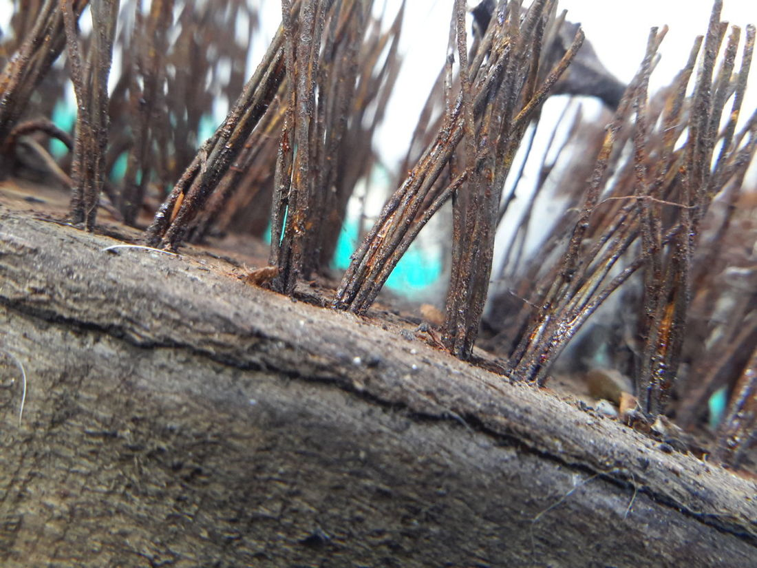 Close-up No People Day Eyeemphoto Rusty Tabletphotografie Tabletphoto Rusty Wire Wire Wire Brush
