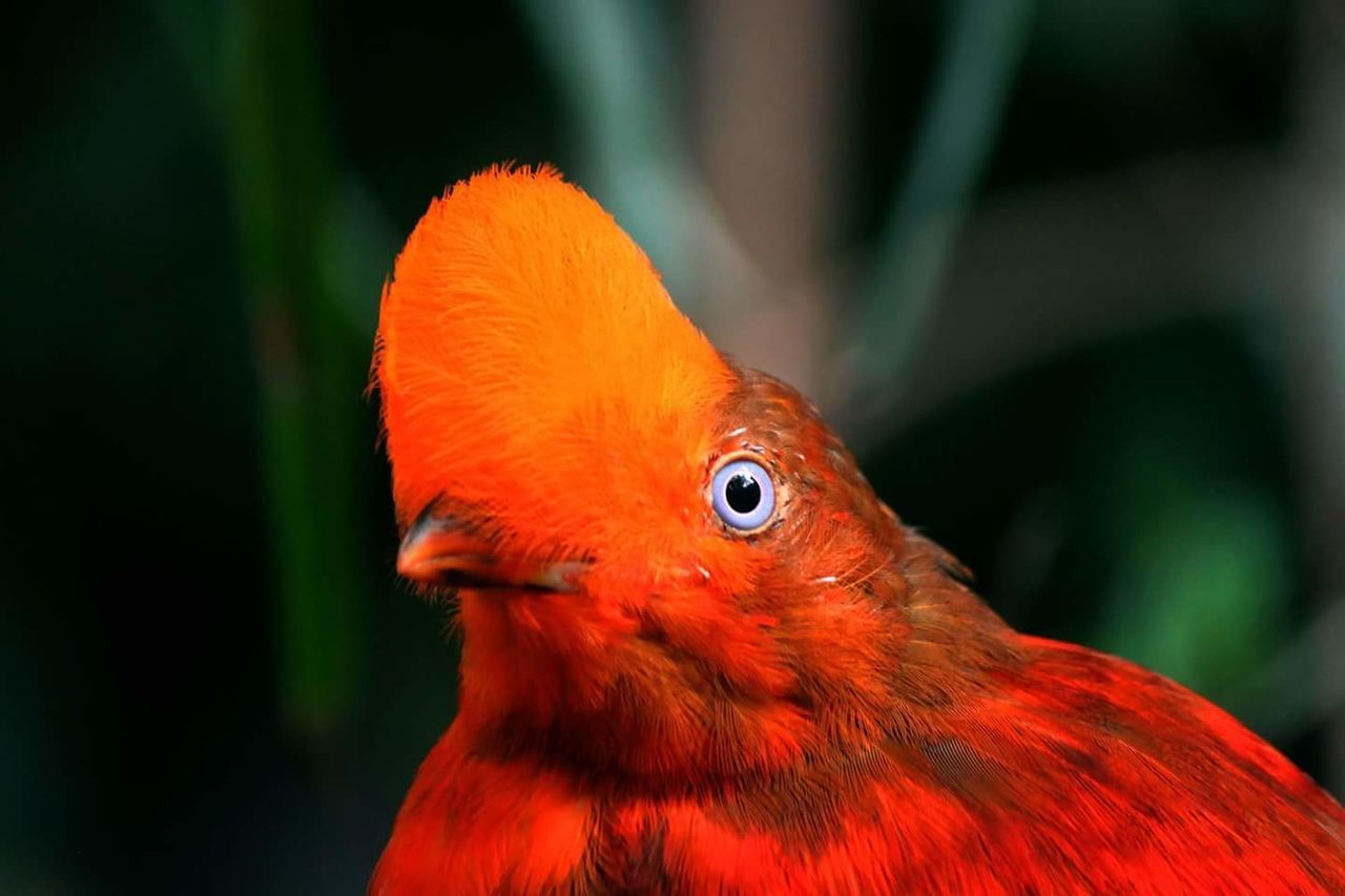 Red Animal Body Part Eye Multi Colored Closing Feather  Parrot Bird Close-up Beak Animal Head  Vibrant Color Tropical Climate Aerial View Sun Looking At Camera Space Nature No People Macaw BlueEyes Striking Beauty