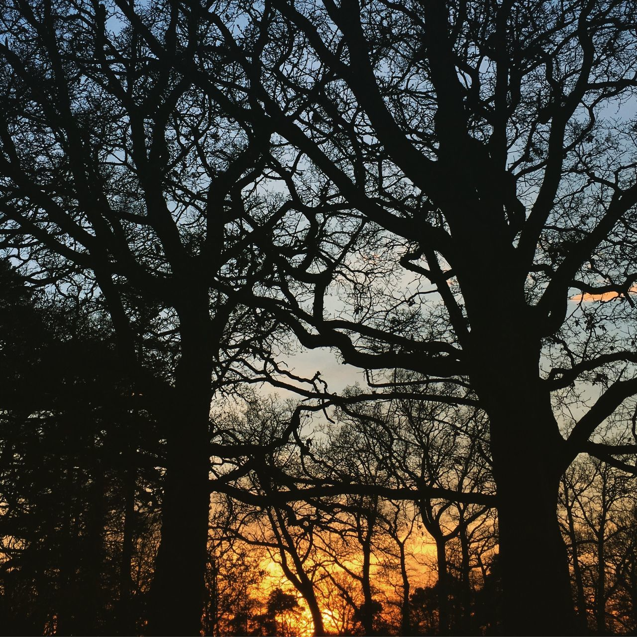 tree, tree trunk, branch, nature, silhouette, beauty in nature, scenics, tranquil scene, tranquility, forest, growth, bare tree, no people, outdoors, day, low angle view, sunset, sky